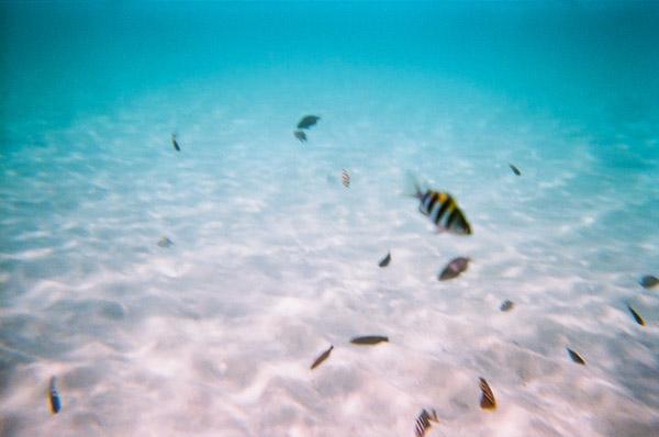 新島に住む魚トロピカルフィッシュ