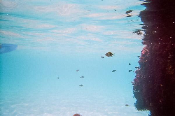 桟橋の磯に暮らす小魚たち