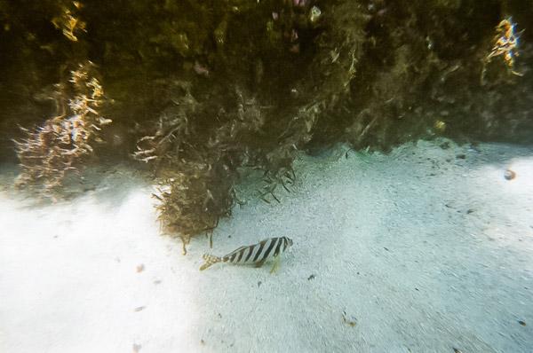 防水写ルンです で綺麗に撮るコツ ゆっくり泳ぐ魚を撮ること