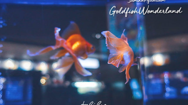 EG h1金魚ワンダーランド