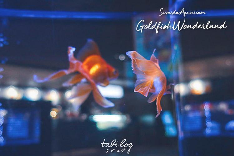 Tokyo Summer Ivents. Goldfish Wonderland at Sumida Aquarium !!