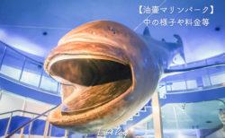 三崎港近くの油壺マリンパークへ行ってきた!水族館の様子やバスでのアクセス方法、お得なクーポン!