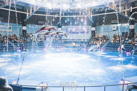品川駅近の水族館【マクセルアクアパーク】が予想以上に面白い!中やショーの様子を一挙公開