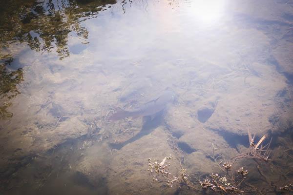 透明度が高くて綺麗な清渓川