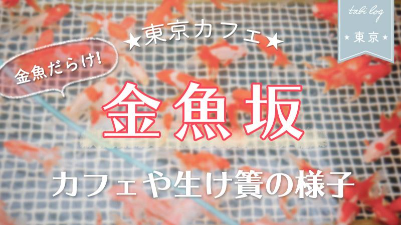 金魚に囲まれたカフェ【金魚坂】!カフェや生け簀の様子