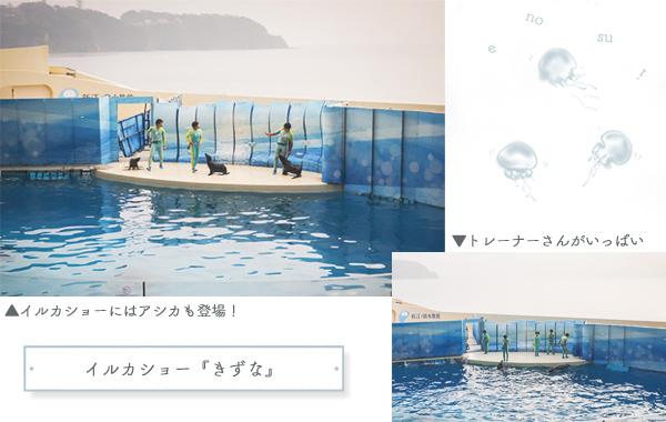 新江ノ島水族館イルカショー