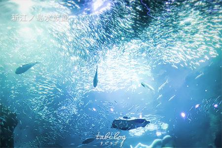 【フォトジェニック】新江ノ島水族館の見どころと美しい写真たち