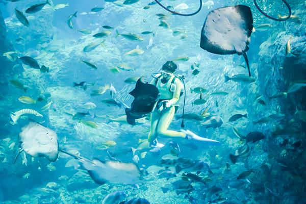 巨大相模湾水槽でのダイビングショー