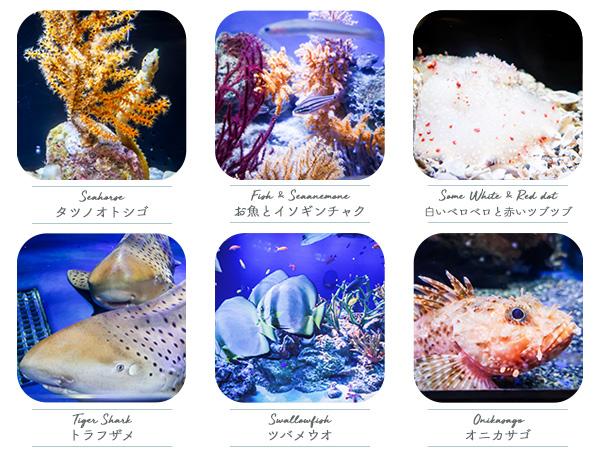 新江ノ島水族館魚たち