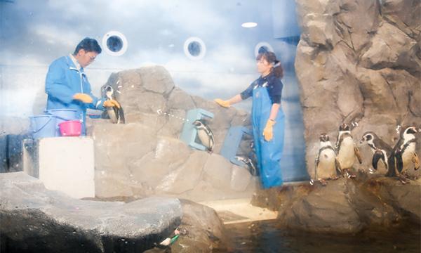 新江ノ島水族館ペンギン