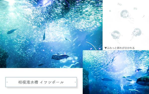 江ノ島水族館巨大水槽イワシボール