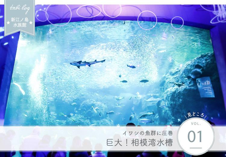 新江ノ島水族館見どころ① 巨大相模湾水槽