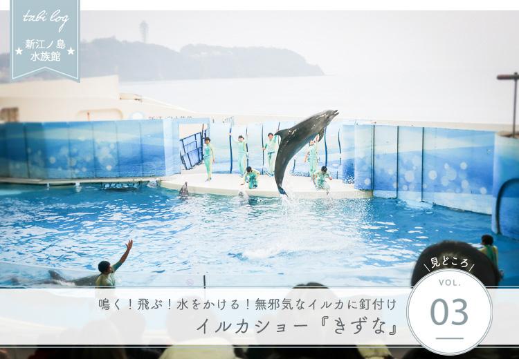 新江ノ島水族館見どころ③ イルカショー