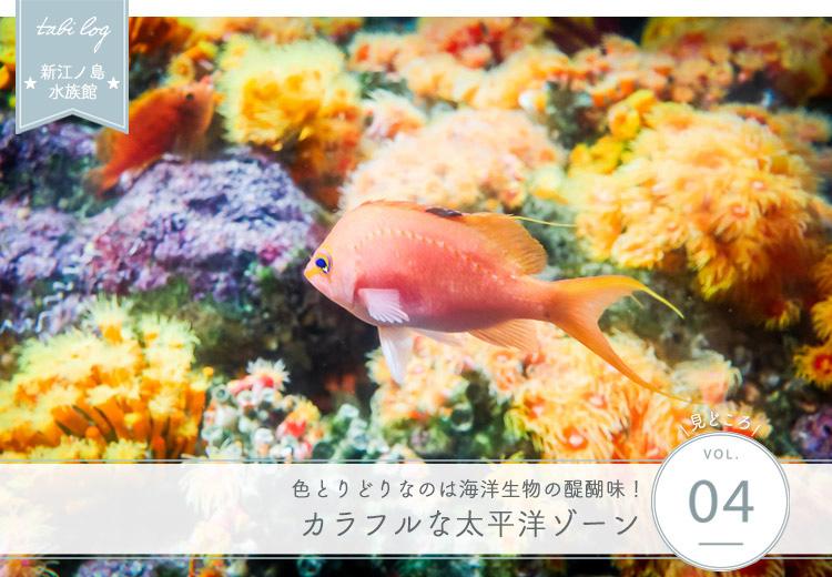 新江ノ島水族館見どころ④ カラフルな太平洋ゾーン