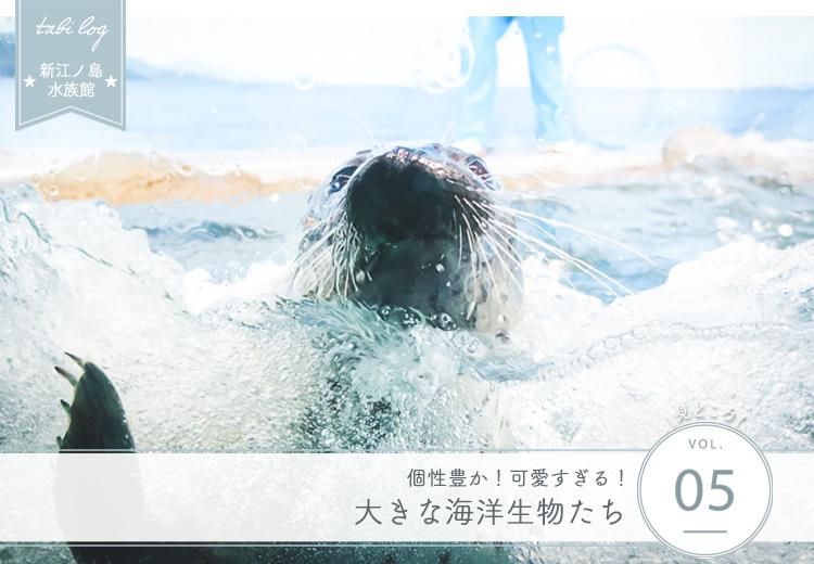 新江ノ島水族館見どころ⑤ 大きな海洋生物たち