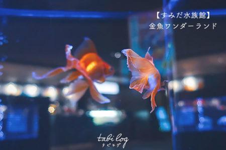すみだ水族館の夏イベント【東京金魚ワンダーランド】の様子や写真を一挙公開!