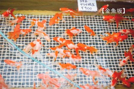 金魚に囲まれたカフェ【金魚坂】が楽しい!カフェや生け簀の様子