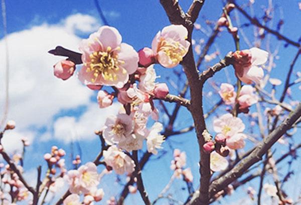 散策地① 秋間梅園で梅の花鑑賞