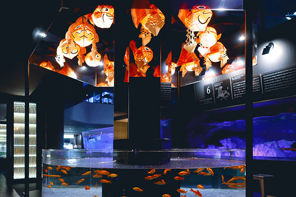 金魚の提灯とたくさんの和金