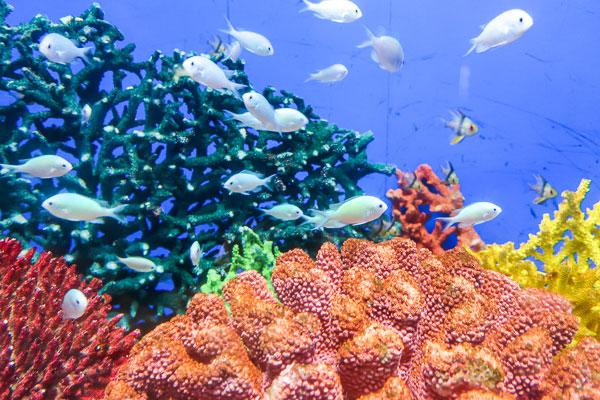 海水魚は美しく可愛い