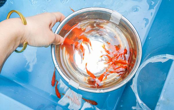 奈良物産展で金魚すくいを2