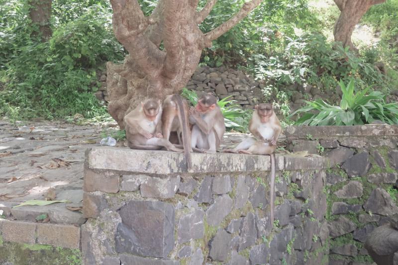 エレファンタ石窟群の猿2