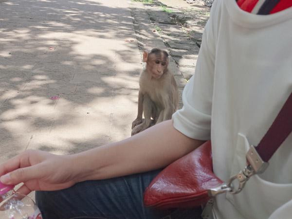エレファンタ石窟群の猿