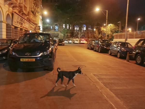 タージマハルホテル付近の野犬