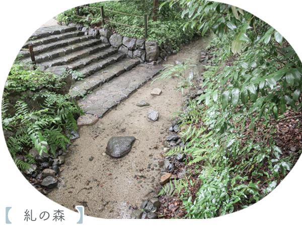 京都観光糺の森