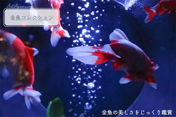 アートアクアリウム美術展展示金魚コレクション
