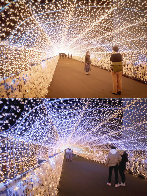 東京メガイルミ 江戸桜トンネル2