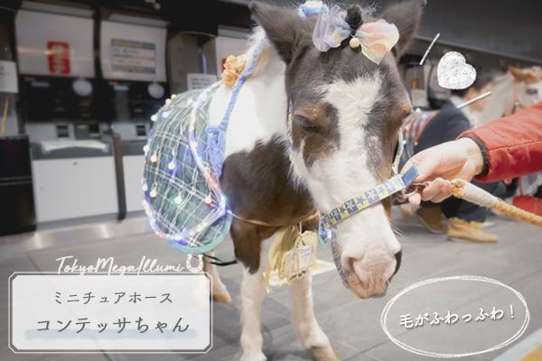 東京メガイルミポニー&ミニチュアホース