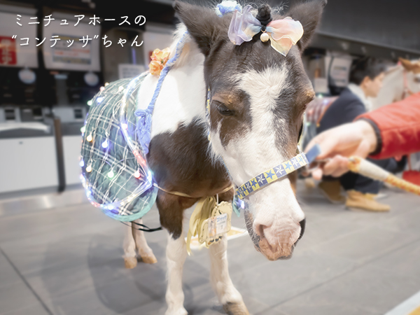 東京メガイルミ 馬触れあい